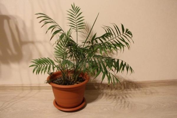 Четыре растения, которые должны быть дома зимой. 15537.jpeg