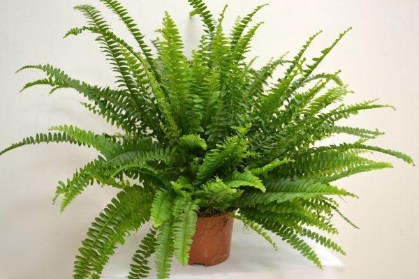 Четыре растения, которые должны быть дома зимой. 15538.jpeg