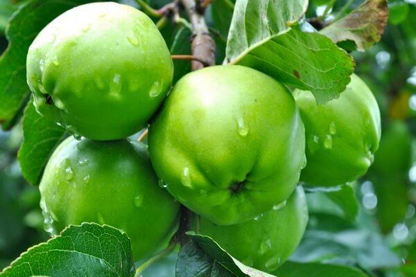 Удивительные факты о яблоках. 16718.jpeg