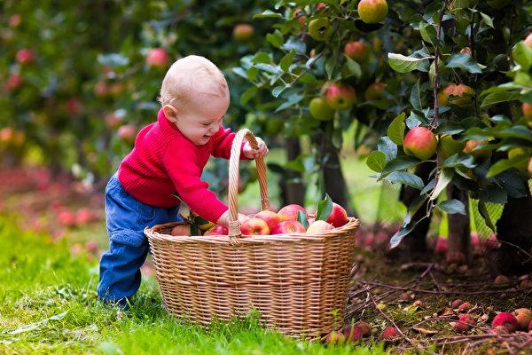 Удивительные факты о яблоках. 16719.jpeg