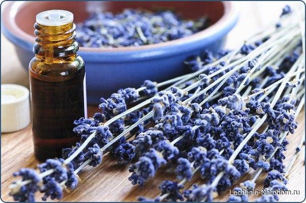 Интересные свойства эфирного масла лаванды