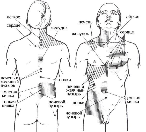 Все болезни делятся по зонам тела