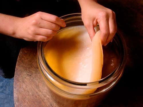Как вырастить чайный гриб из черного чая или шиповника