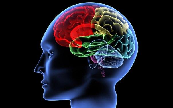 Ваш мозг любит...