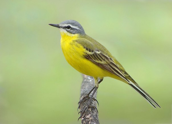 Когда поют птицы – болезни уходят!!!