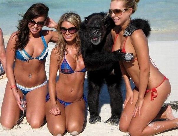 Шимпанзе делятся друг с другом полезными микробами
