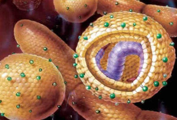 Как повысить эффективность помощи больным вирусным гепатитом С. гепатит