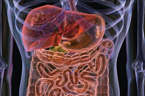 Ожирение будут лечить пилюлями из фекалий Видео. ожирение