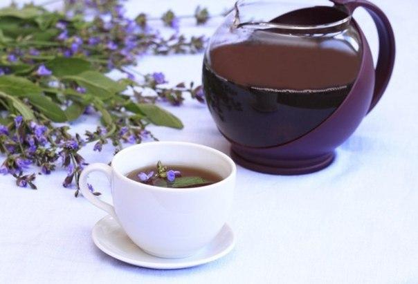 Греческий чай из шалфея