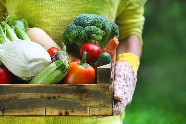 15 полезных овощей, которые нужно есть регулярно