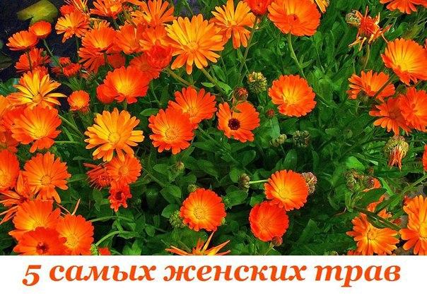 Пять самых женских растений