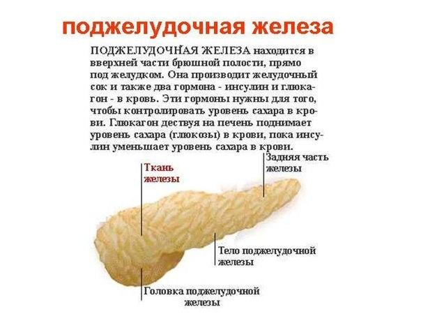 Как болит панкреатит ?