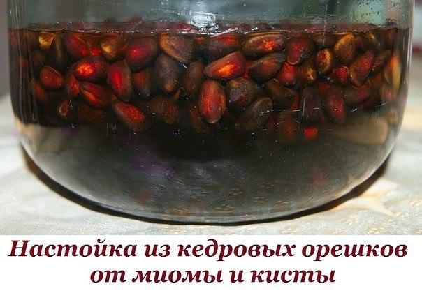 От миомы и кисты настойка из кедровых орешков