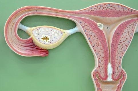 Травяная методика лечения миомы