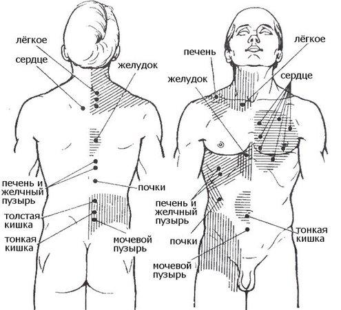 Все болезни делятся по зонам тела :