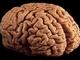Кокаин заставляет клетки мозга самоуничтожаться