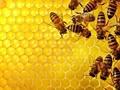 Шесть причин заменить сахар мёдом