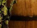 Невероятные свойства банных веников, о которых ты никогда не слышал!