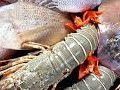 Как морепродукты помогают забеременеть
